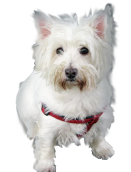 Pet Finder,lost pet finder,pet finder websites,home again pet finder,pet finders near me